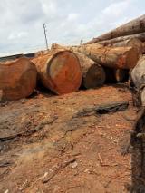 Vender Troncos Industriais Azobé Camarões Douala