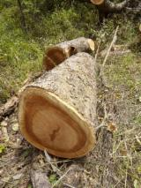 Lasy I Kłody Uganda - Kłody Tartaczne, Doussie