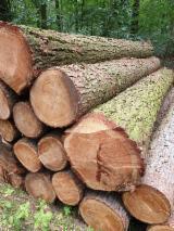 Vender Troncos Para Folheados Larix , Pinus - Sequóia Vermelha Áustria