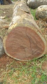 Balsamo Saw Logs, 30-100 cm