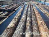 Fir/Hemlock Saw Logs (Bulk from Canada), 24-40'
