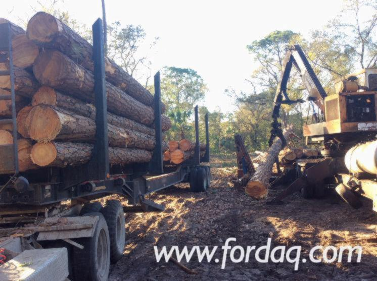 Southern-Yellow-Pine-Saw-Logs