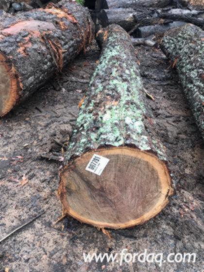 """White Oak/Chestnut Veneer Logs, 2/3/4 SC, 13""""+"""