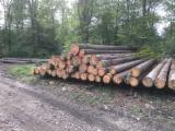 Interested in Spruce Saw Logs, 11.8 m
