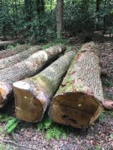 Oak Veneer Logs, 50-90 cm