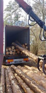 Vender Troncos Serrados Pinus - Sequóia Vermelha Polônia