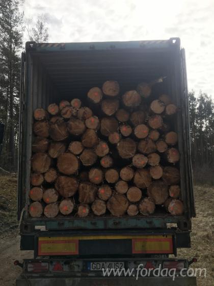 Softwood Logs