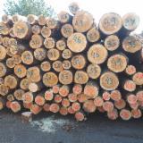 Madeira Macia  Troncos Pinus Pinus Sylvestris - Sequóia Vermelha - Comprar Troncos Serrados Pinus - Sequóia Vermelha, Abeto - Whitewood FSC Lituânia