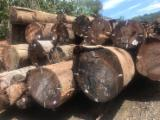 Vender Troncos Serrados Jatoba Suriname