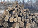 Poplar Logs For Sale A/B 30+ cm