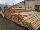 null - Canas de bambú