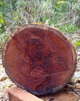 Terreno Forestale - Compro Terreno Forestale Bangkirai West Kutai Barat