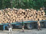 null - Teak Round Saw Logs, 30+ cm
