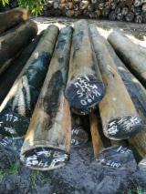 Palo Santo Debarked Saw Logs, 25-35+ cm