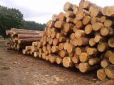 Venta Troncos Para Aserrar Pino Silvestre - Madera Roja Lituania Central Europe