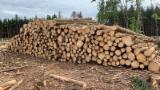 Spruce Industrial Logs, 3.9-11.5 m