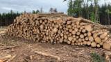 Vender Troncos Industriais Abeto - Whitewood Polônia