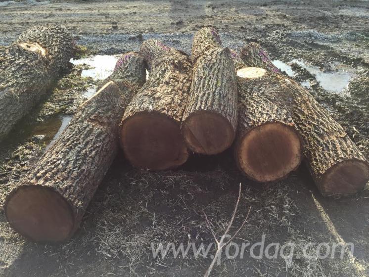 Black-Walnut-Saw-Logs