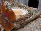 Vend Grumes De Tranche Chêne