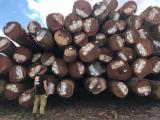 Vender Troncos Serrados Angelim Pédra, Basralocus , Sucupira Preta Suriname