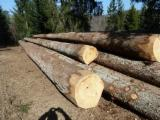 French Spruce/Fir Saw Logs, ABC, 25-60 cm