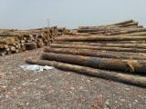 Vender Troncos Serrados Pinheiro Amarelo Do Sul EUA Savannah