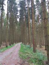 Bois sur Pied à vendre - Vend parcelle Epicéas environ 1000m³