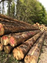 Achète Grumes De Sciage Epicéa - Bois Blancs
