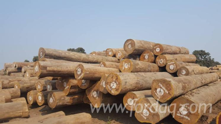 Okan-Eveuss-Saw-Logs-%28Congo%29
