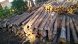 FSC Pine Saw Logs, 20+ cm 40 cm