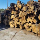 Cele mai noi oferte pentru produse din lemn - Fordaq - IBA Impex/Integrated Business Applications Limited - Vindem Bustean De Gater Măslin
