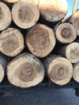 Poplar Peeling Logs (Populous Alba), 25-45+ cm