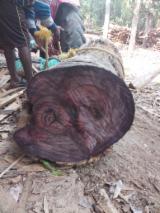 null - AD East Indian Rosewood (Dalbergia Latifolia) Planks, 10'