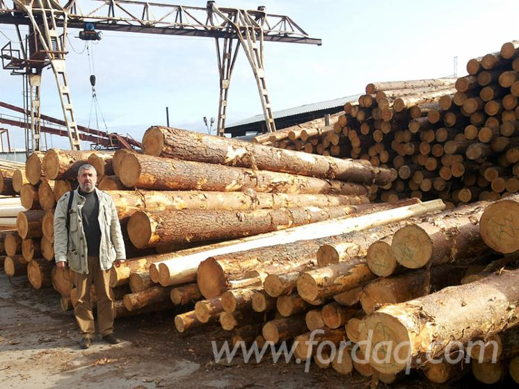 Spruce & Pine Machine Rounded Logs for Cabins and Houses