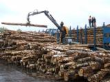 Birch Pulp, Industrial Logs from Russia's North-West