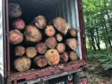 Fir/Spruce Saw Logs, B/C, 25+ cm