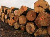 Fresh Cut Beech Saw Logs, ABC, 3+ m