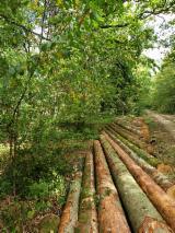 Spruce Saw Logs (France), ABC, 20+ cm
