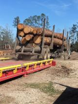 Southern Yellow Pines Logs, Diameter 10 in