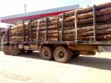 Acacia Log For Sale, Diameter 60 cm