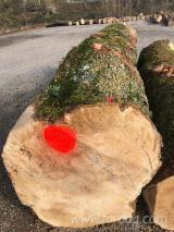 White Ash Veneer Logs, Diameter 60+ cm