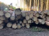 Spruce Saw Logs, Diameter 14+ cm