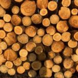 Vender Troncos Industriais Abeto , Pinus - Sequóia Vermelha, Abeto - Whitewood Hungría