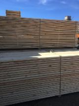 Comprar Pinus - Sequóia Vermelha 38 mm