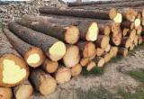 Spruce Saw Logs, ABCD, 20+ cm