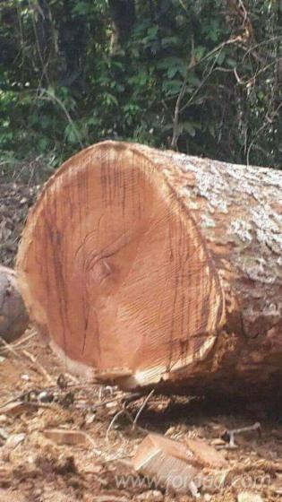 Azob%C3%A9-Doussie-Ebony-Industrial-Logs