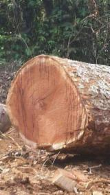Azobé/Doussie/Ebony Industrial Logs, 30-50'