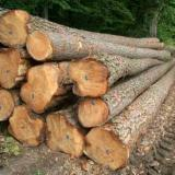 Teak Industrial Logs, Grade A