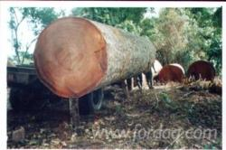 Zingana-Industrial-Logs