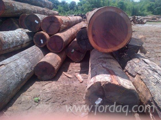 Vender Troncos Industriais Zingana Camarões